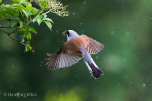 01_SENSES_Birdwatching_(c)Hansjörg_Ribis