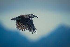 02_SENSES_Birdwatching_(c)Hansjörg_Ribis