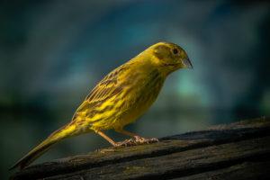 03_SENSES_Birdwatching_(c)Hansjörg_Ribis