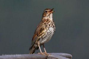 04_SENSES_Birdwatching_(c)Hansjörg_Ribis